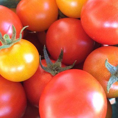 tomatoeshoriz